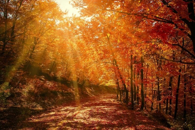 forest10.jpg