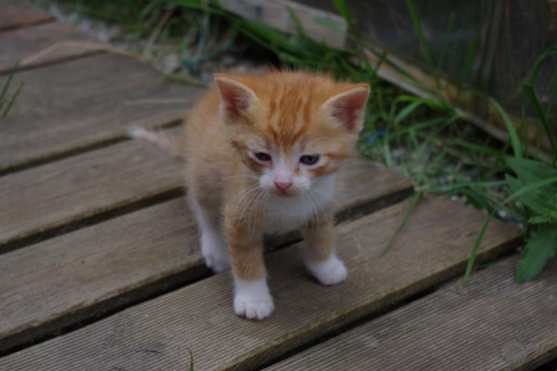 chat adulte à donner brest