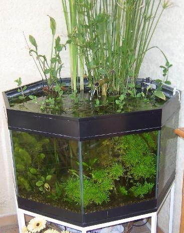 Sortie d 39 eau zennn - Tuteur bambou gros diametre ...