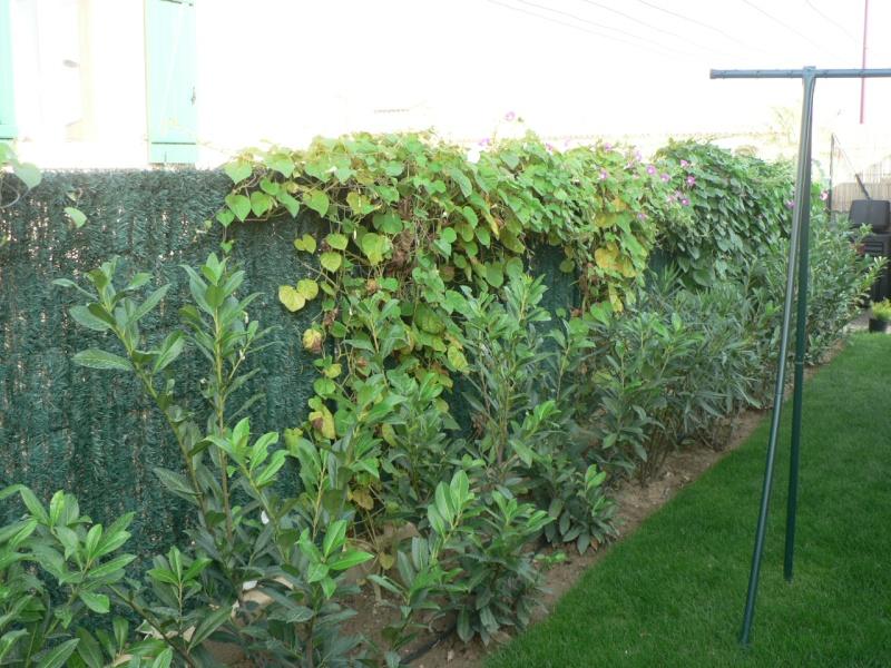 plante grimpante sur grillage mitoyen