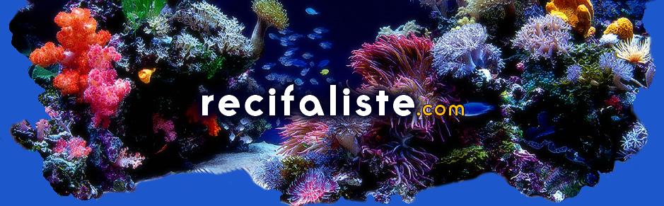 RECIFALISTE.com