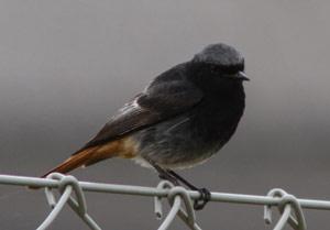 Identifier les oiseaux des parcs et des jardins au for Petit oiseau avec houpette