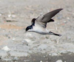 Identifier les oiseaux des parcs et des jardins au for Liste oiseaux des jardins