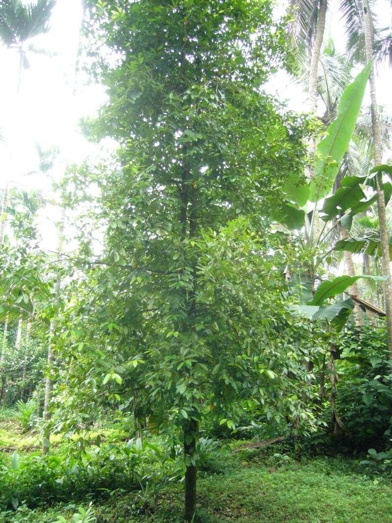 Muscadier for Commande plantes par correspondance