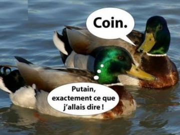 image marrante de canard