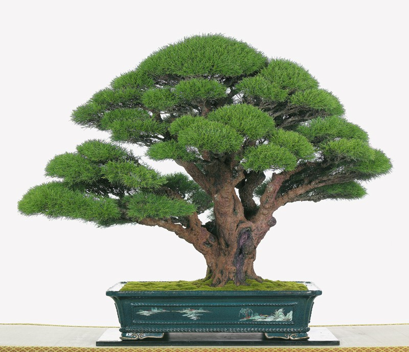 Tenth Asia Pacific Bonsai and Suiseki Exhibition