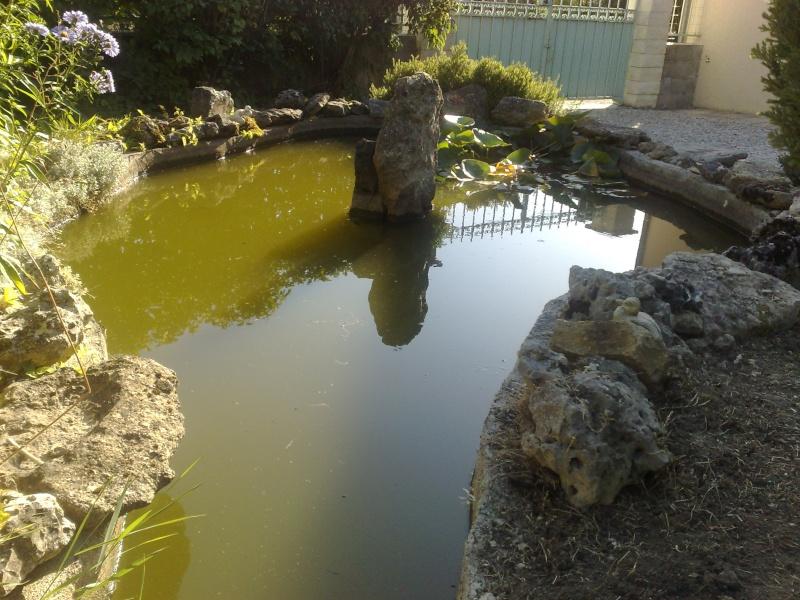 Bassin exterieur for Bassin aquarium exterieur