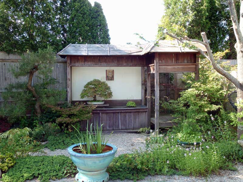 Backyard Bonsai Display : Outside Bonsai display space