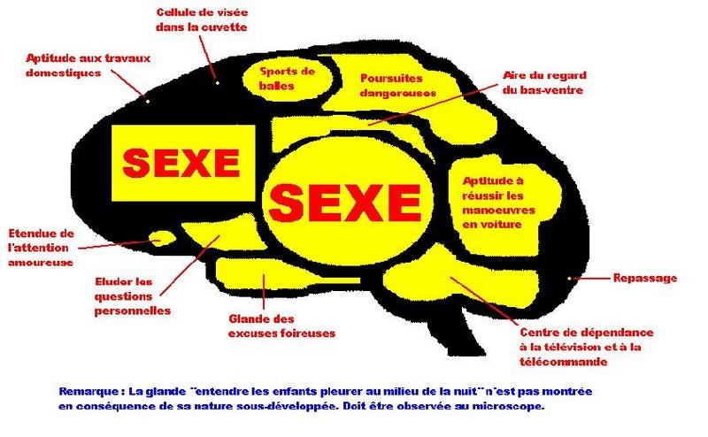 Cerveau d'un homme^^
