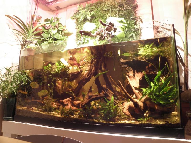 Le paludarium juju for Mur vegetal aquarium