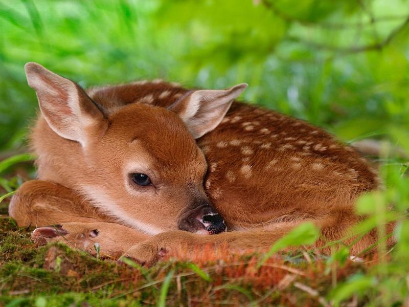 Sevimli hayvanların resimleri
