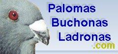 Palomeros en miami