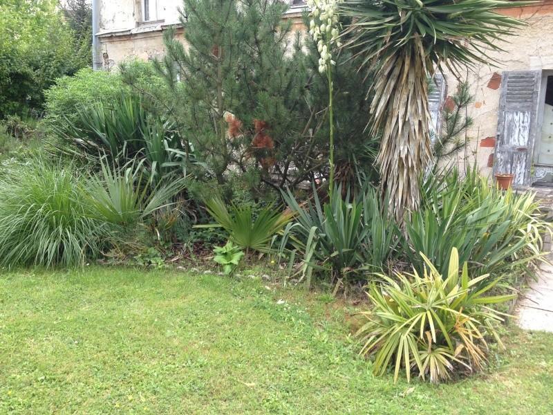 Le forum des fous de palmiers r sistance au froid du sabal palmetto - Camelia resistance au froid ...