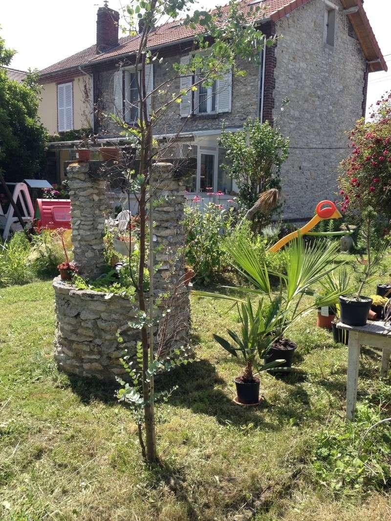 le forum des fous de palmiers mon jardin dans le sud est de l 39 oise limite 02 77. Black Bedroom Furniture Sets. Home Design Ideas