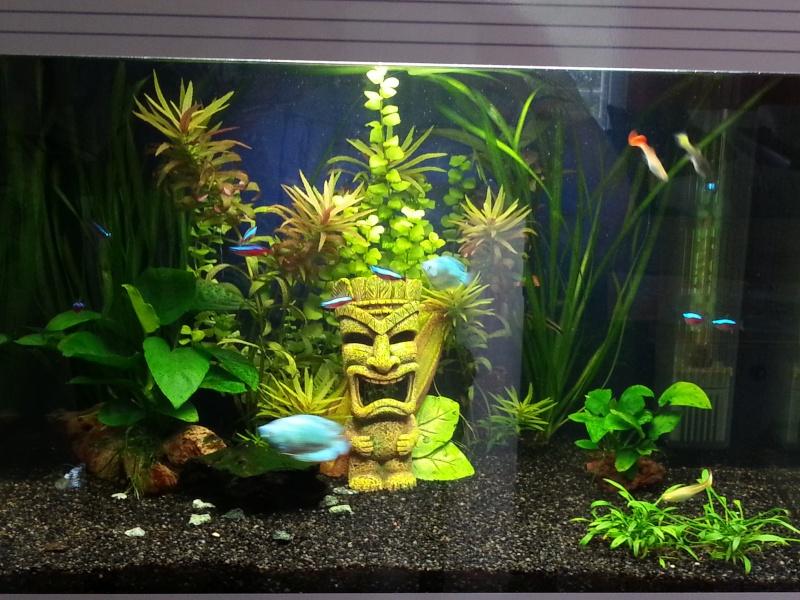 Guppy malade comportement trange for Vendeur aquarium