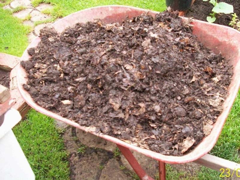 Semis 2013 de lagricole page 2 - Gros vers blancs dans le compost ...