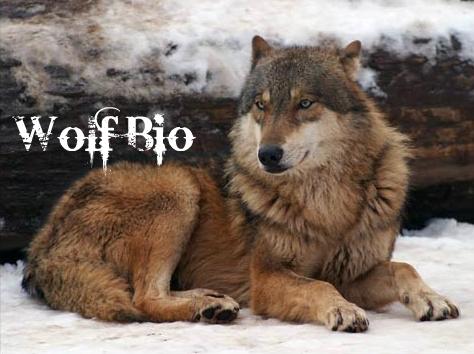 http://i83.servimg.com/u/f83/18/19/03/01/wolf_b10.jpg