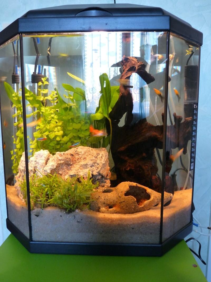 Re aquarium de 30 litres de mon fils lilian qui a 6 ans for Aquarium 30 litres pas cher